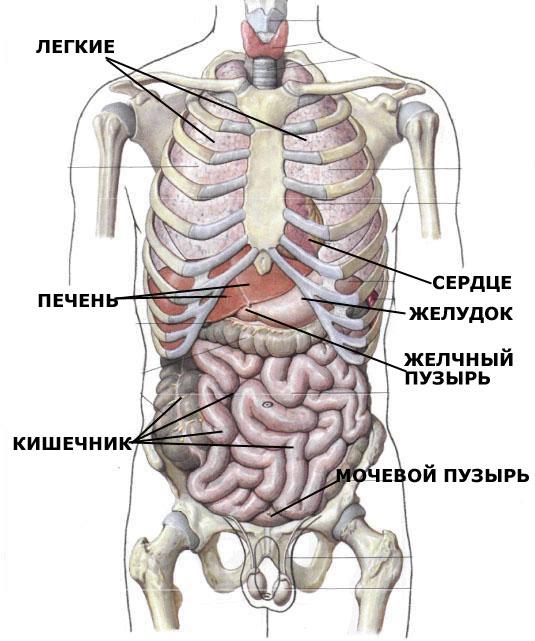 Зная анатомию человека