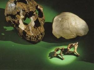 Ученые обнаружили новый ископаемый вид человека