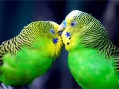 Чем опасен орнитоз и как с ним бороться