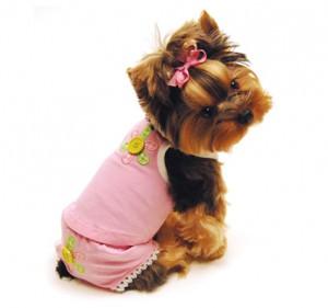 Одежда для собак: зачем она нужна?