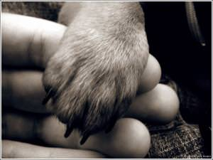 Средства по уходу за животными