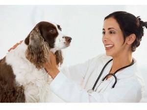 Как вызвать ветеринара на дом